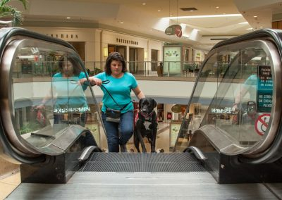 american-service-dog-at-mall-46