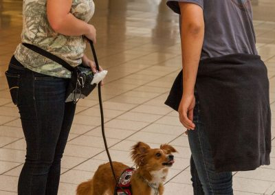 american-service-dog-at-mall-49