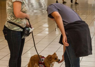 american-service-dog-at-mall-50