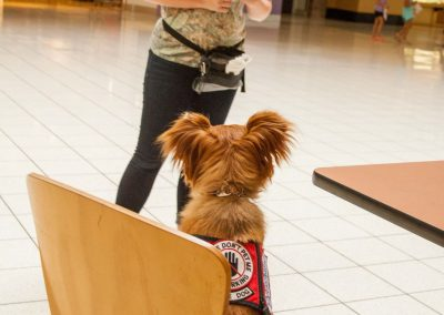 american-service-dog-at-mall-51