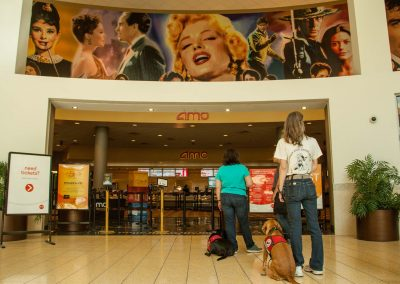 american-service-dog-at-mall-53