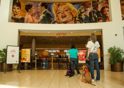 american-service-dog-at-mall-54