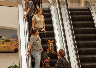 american-service-dog-at-mall-55