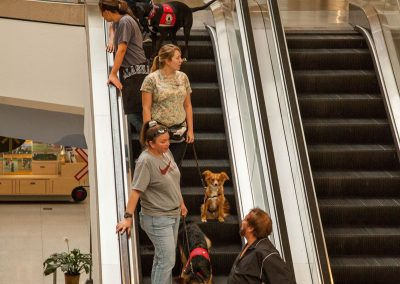 american-service-dog-at-mall-56