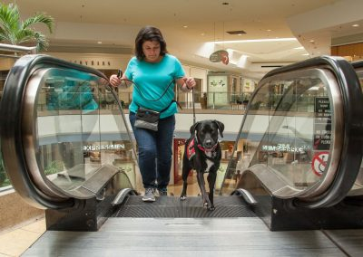 american-service-dog-at-mall-57