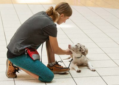 american-service-dog-at-mall-6