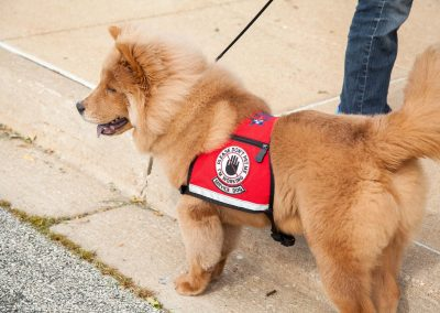 american-service-dog-at-mall-62