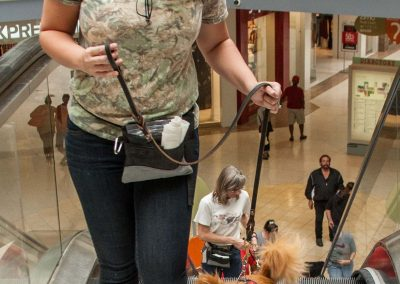 american-service-dog-at-mall-66