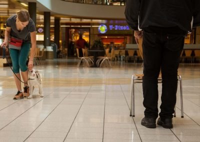 american-service-dog-at-mall-7