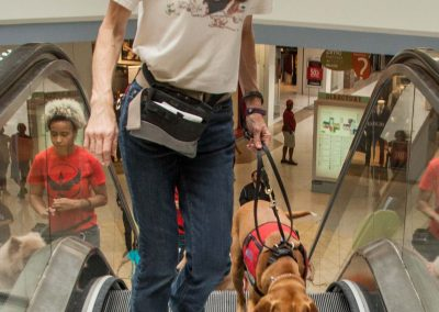 american-service-dog-at-mall-70