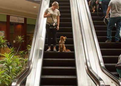 american-service-dog-at-mall-71