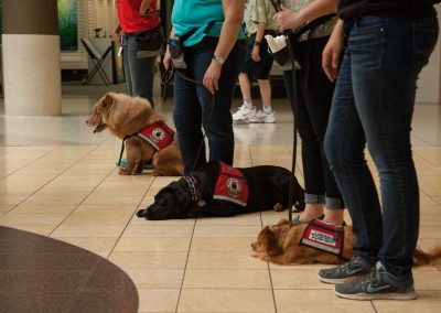 american-service-dog-at-mall-78