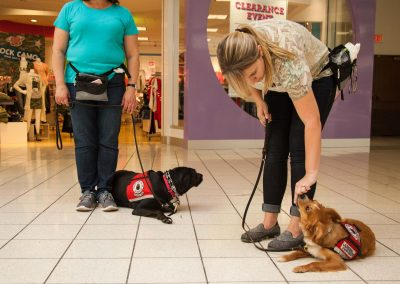 american-service-dog-at-mall-8