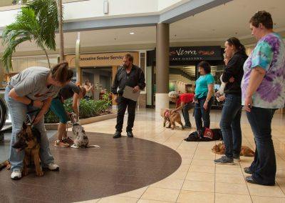 american-service-dog-at-mall-80