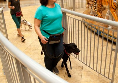 american-service-dog-at-mall-89