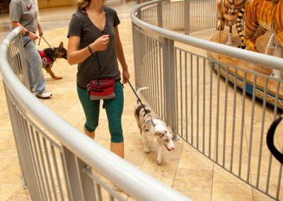 american-service-dog-at-mall-91