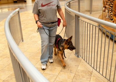 american-service-dog-at-mall-92