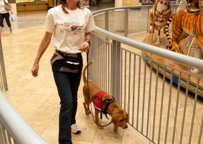 american-service-dog-at-mall-94